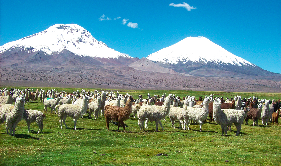 PUTRE-NATIONAL-PARK-LAUCA